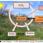 The potential and challenges of biomass